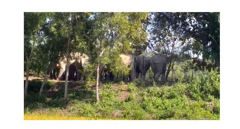 লোহাগাড়ায় বন্যহাতির আক্রমণে কৃষকের মৃত্যু